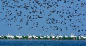 chilika-lake-bird-696x464