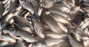 andhra-pradesh-fish-640x480