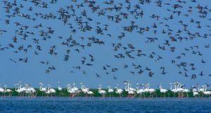 chilika-lake-bird-696x464