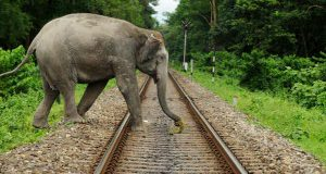 Sound-of-bees-to-keep-elephants-off-railway-tracks